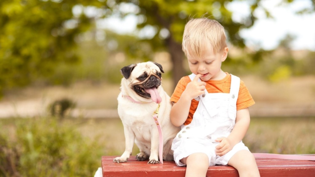 Are Pugs Good With Young Children The Ultimate Parent S Guide Orbit Pets